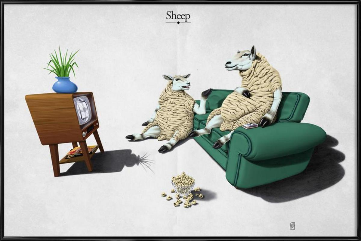 Sheep (titled) Framed Poster
