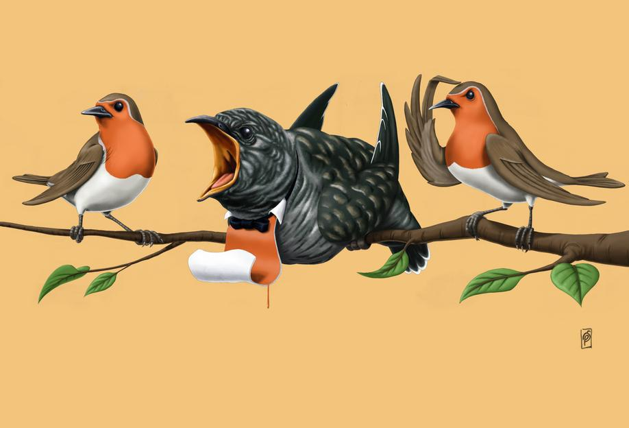Cock Robin (colored) Aluminium Print