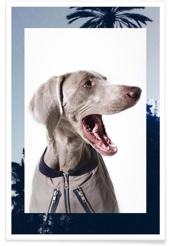 Chiens, The Tailwaggers 6-3 affiche