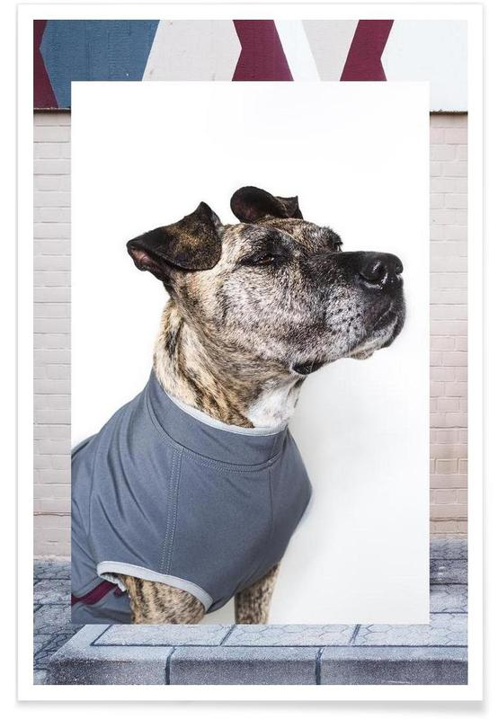 The Tailwaggers 7-3 Poster