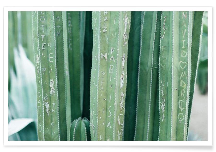 Kaktus, Marrakesh Paradise 5 -Poster