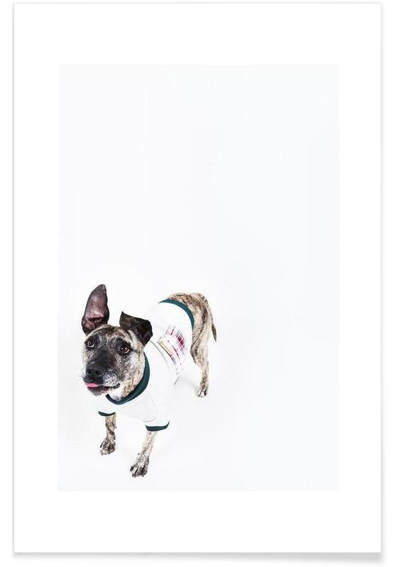 Honden, The Tailwaggers 5-2 poster