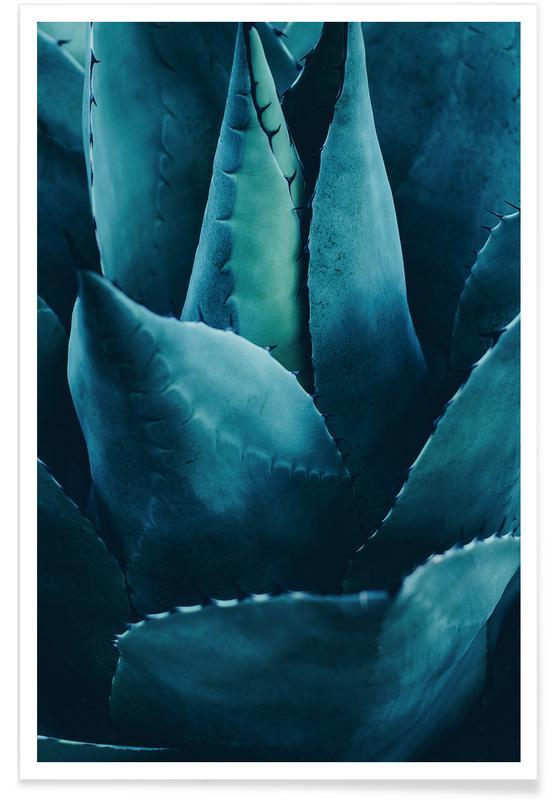 Kaktus, Cactus No.4 -Poster