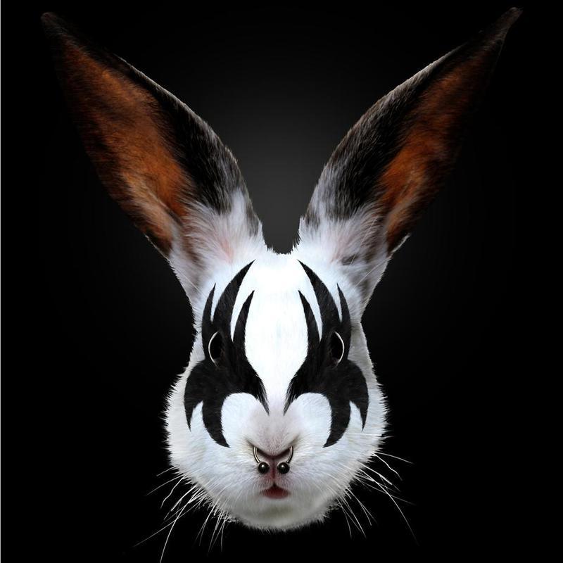 Kiss Of A Rabbit -Acrylglasbild