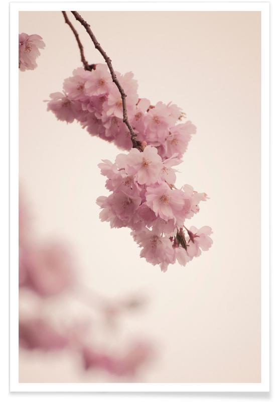 Forever Spring Poster