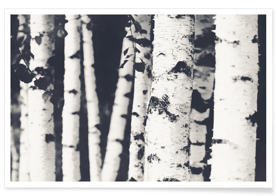 Sort & hvidt, Skove, Birketræer Plakat