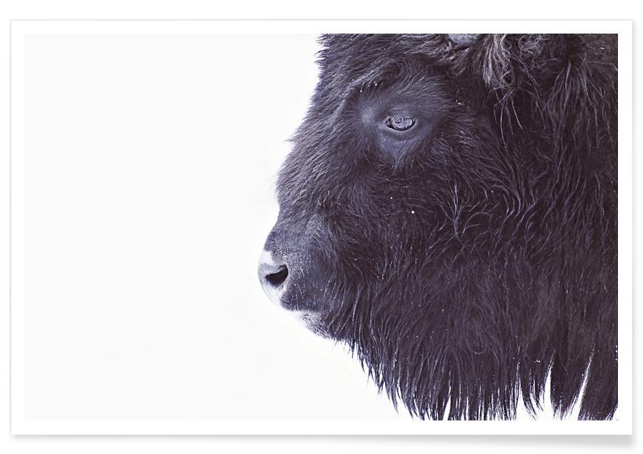 Black Buffalo -Poster