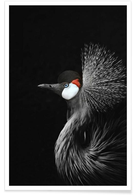 Kraniche, Black Crowned Crane -Poster