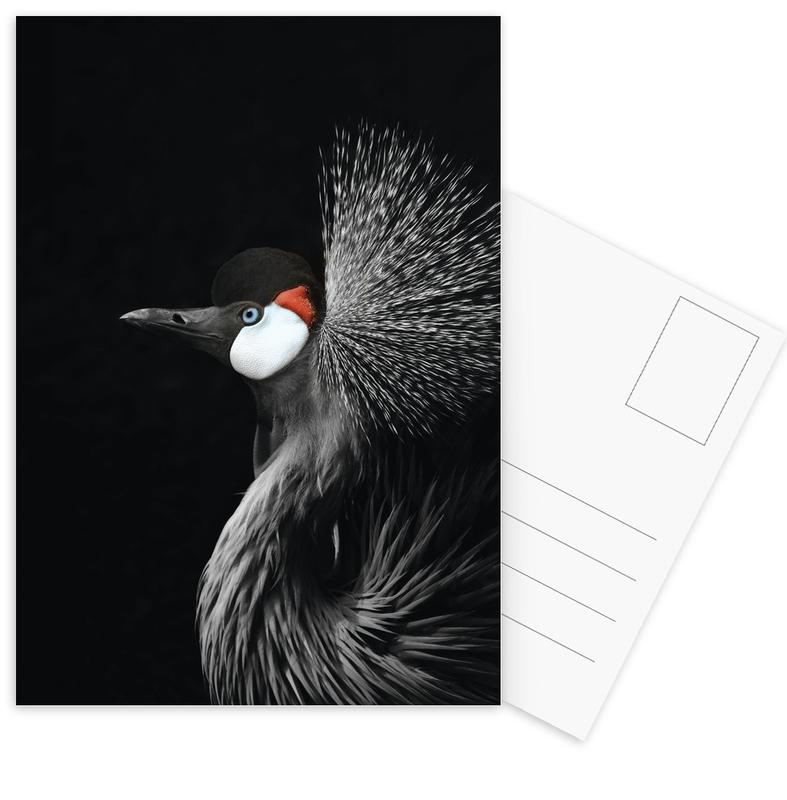 Black Crowned Crane Postcard Set