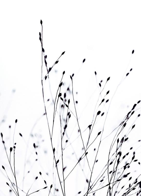 Black Grass -Leinwandbild