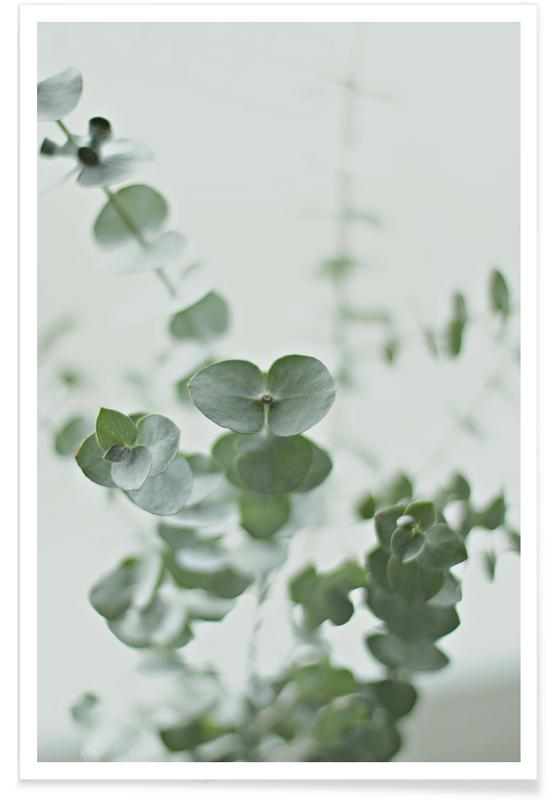 Eucalyptus Green 2 Poster
