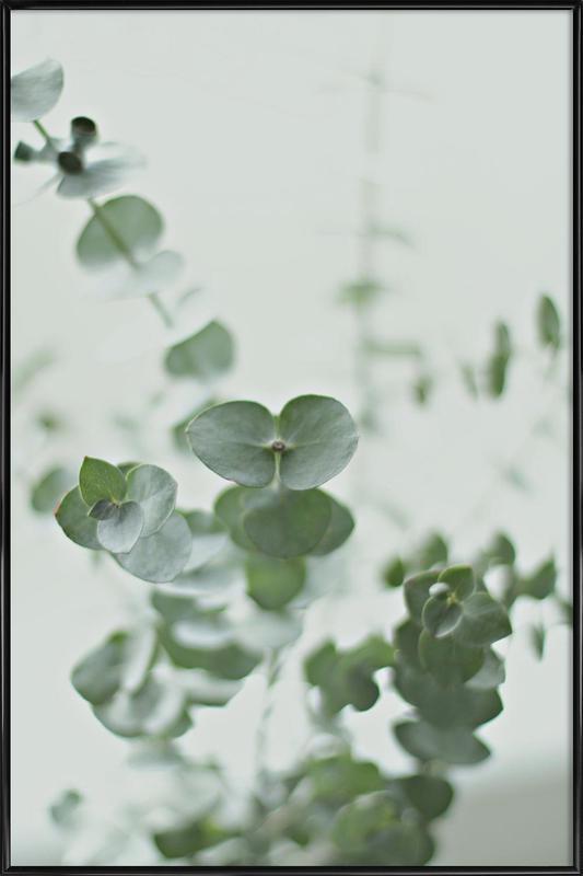 Eucalyptus Green 2 affiche encadrée