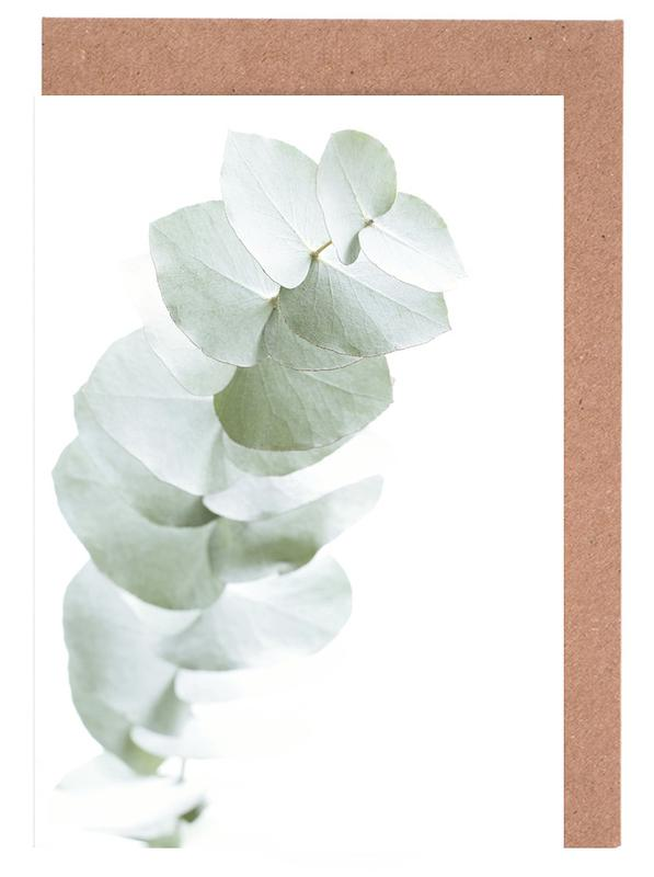 Eucalyptus White 1 Greeting Card Set