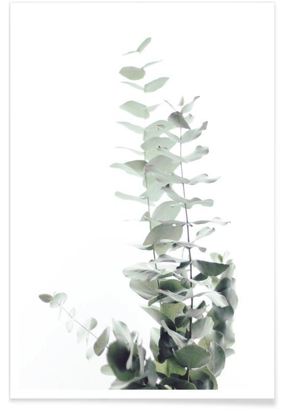 Eucalyptus White 2 Poster