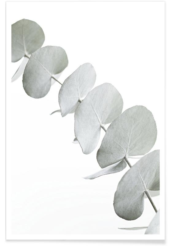 Noir & blanc, Feuilles & Plantes, Eucalyptus White 3 affiche