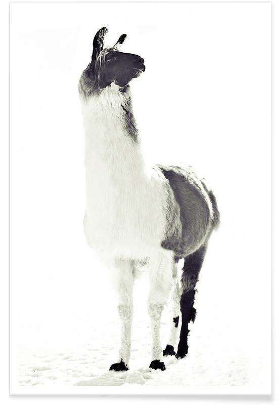 Lama, Schwarz & Weiß, Fluffy Lama -Poster