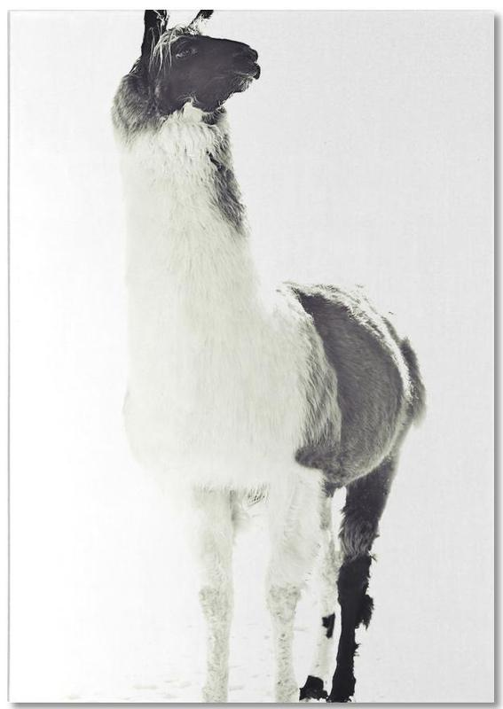 Lama, Schwarz & Weiß, Fluffy Lama -Notizblock