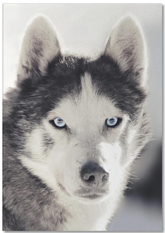 Dogs, Husky Notepad