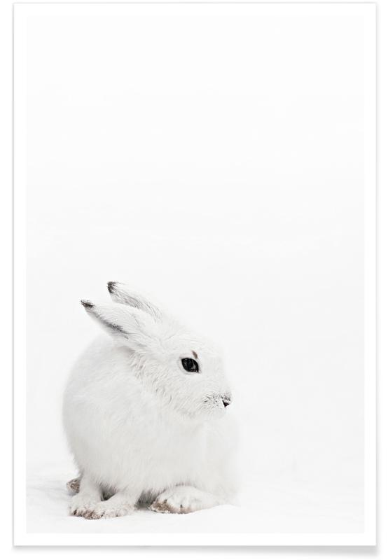 Arctic Hare -Poster