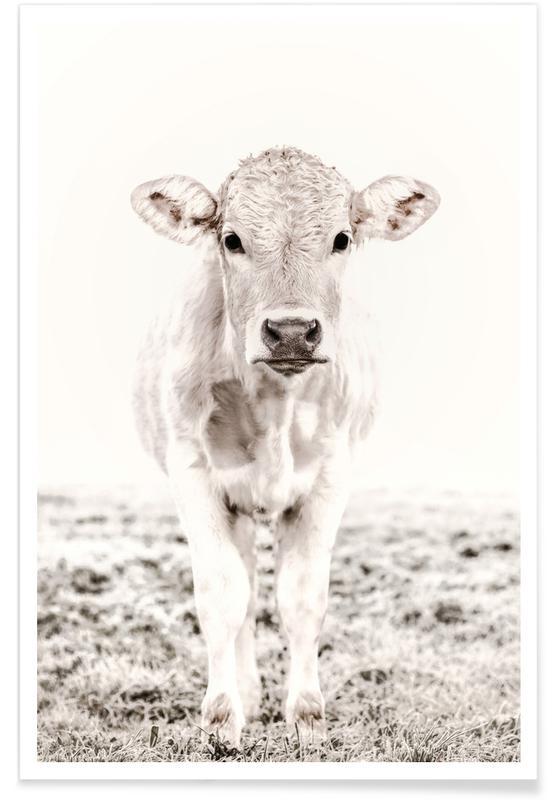 Koeien, Blonde Cattle Maverick poster