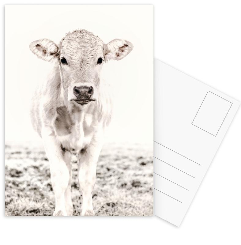 Kühe, Blonde Cattle Maverick -Postkartenset
