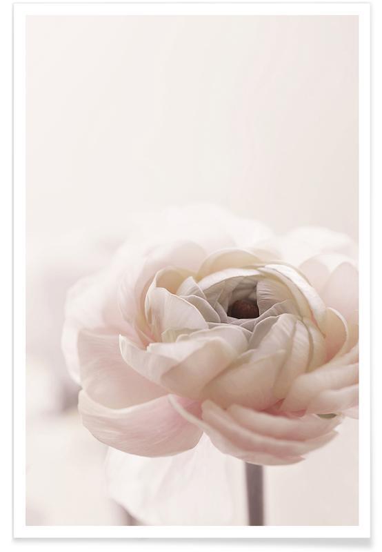 Roses, Flower 011 affiche
