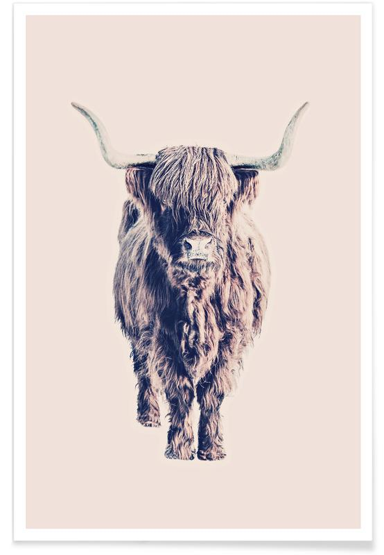 Vaches Highland, Buffles, Highland Cattle Colin Rose affiche