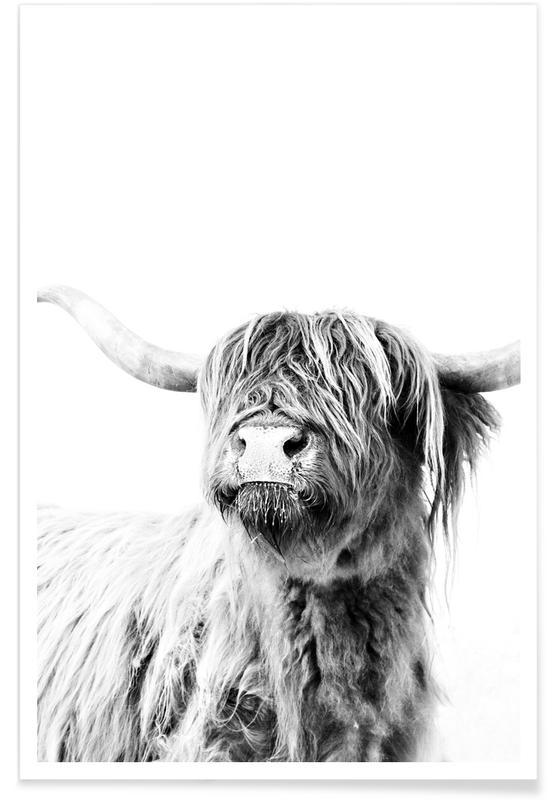Zwart en wit, Schotse Hooglanders, Buffels, Highland Cattle Frida 2 poster