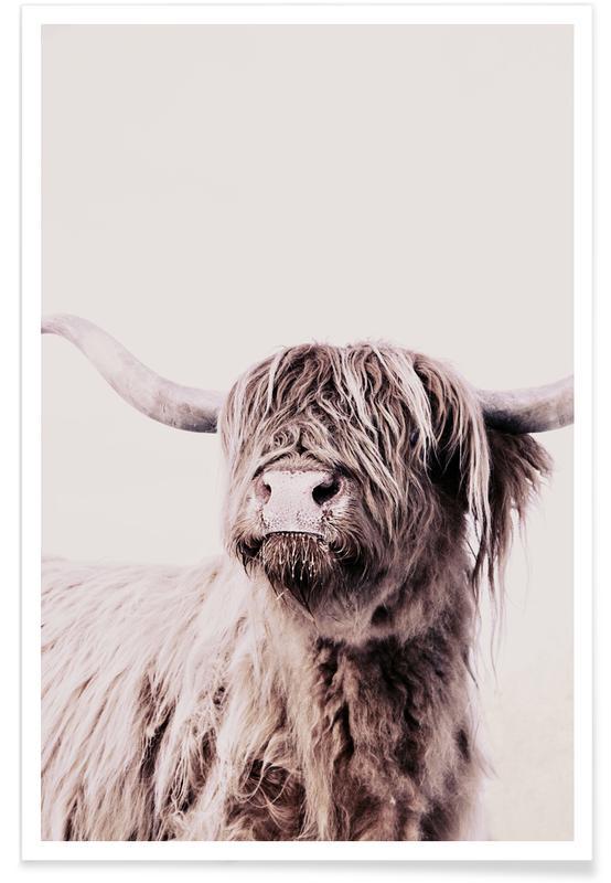 Highland Cattle Frida Crème -Poster