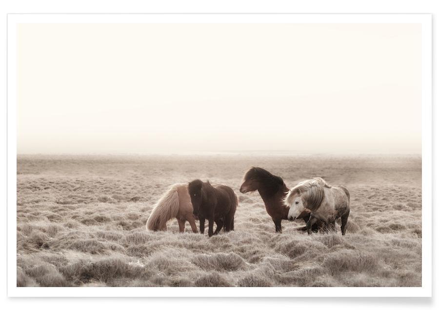 Iceland Wild Horses Poster