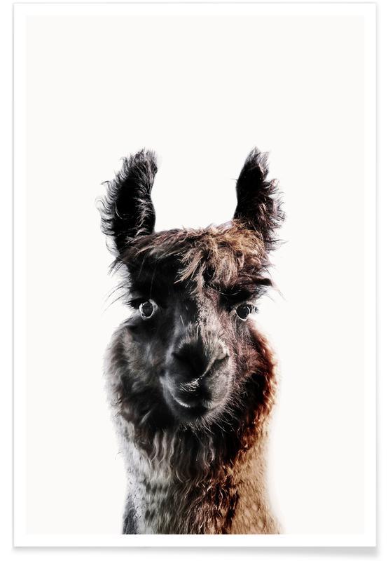Llamas, Funny, Llama George Poster