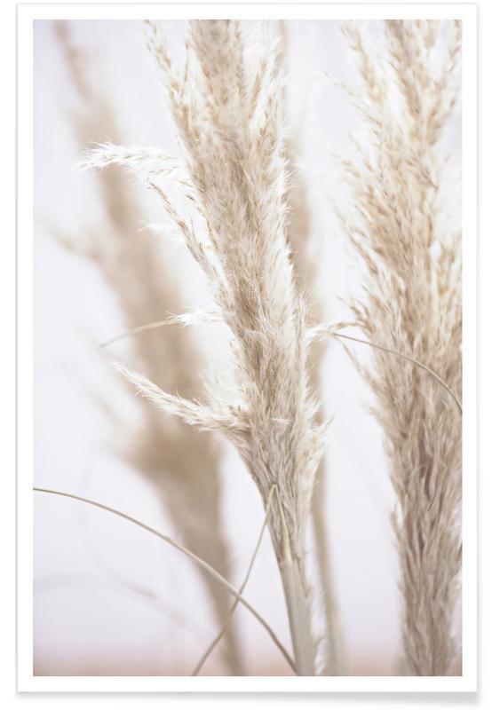 Feuilles & Plantes, Pampas Reed 01 affiche