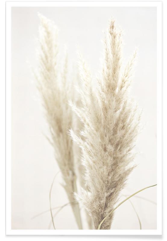 Pampas Reed 02 Plakat