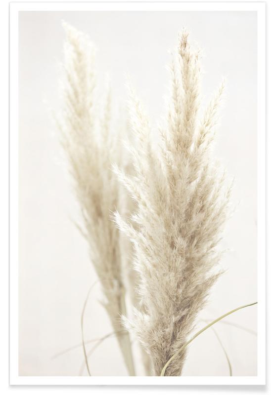 Pampas Reed 02 Poster