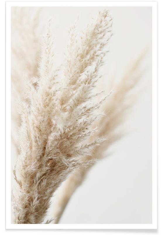 Feuilles & Plantes, L'herbe de la pampa affiche