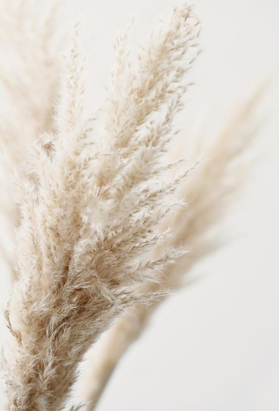 Pampas Reed 03 Aluminium Print