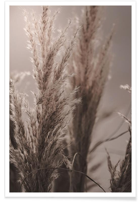 Pampas Reed 06 Poster