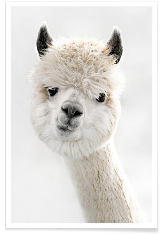 Rolig, Peeky Alpaca Poster