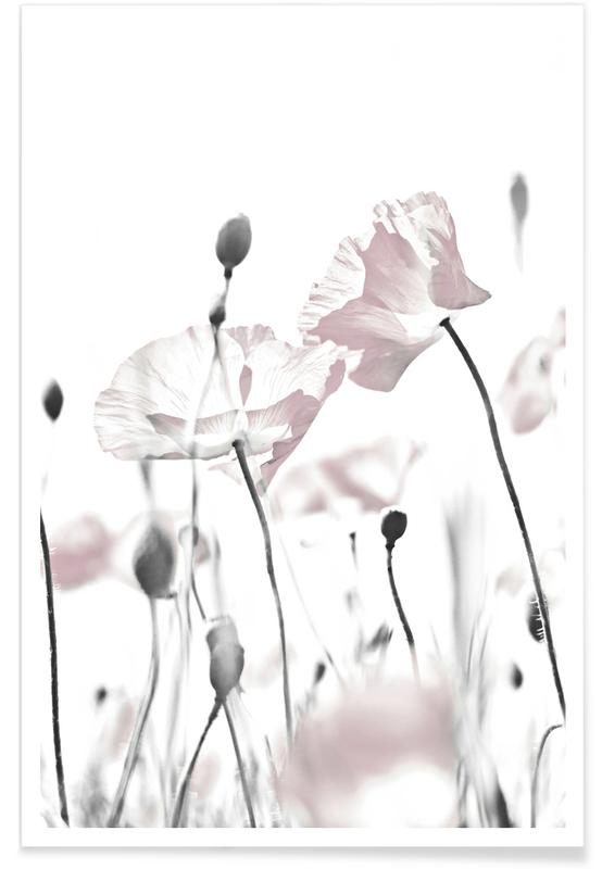 Poppies, Poppy White 1 Poster