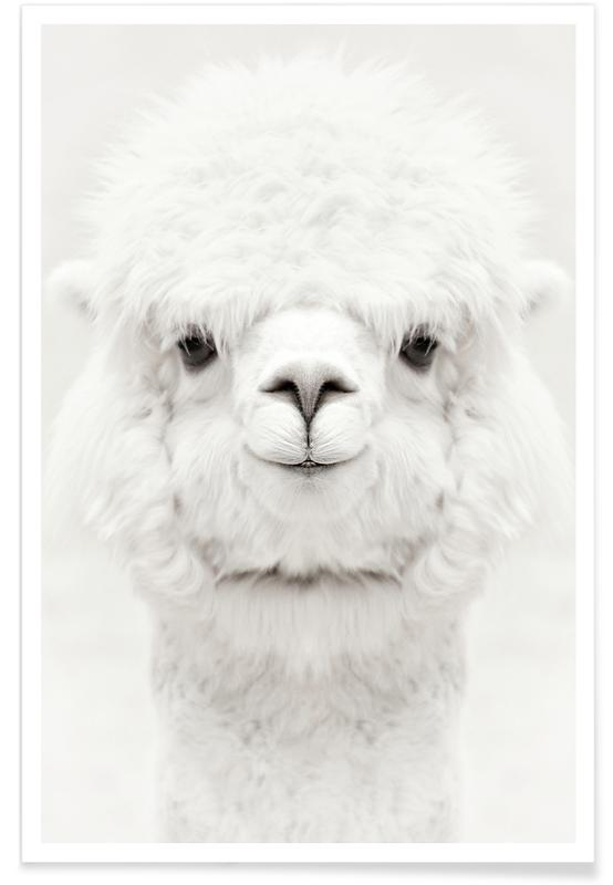 Smiling Alpaca Poster