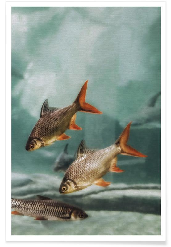 Fish, The Swarm 2 Poster