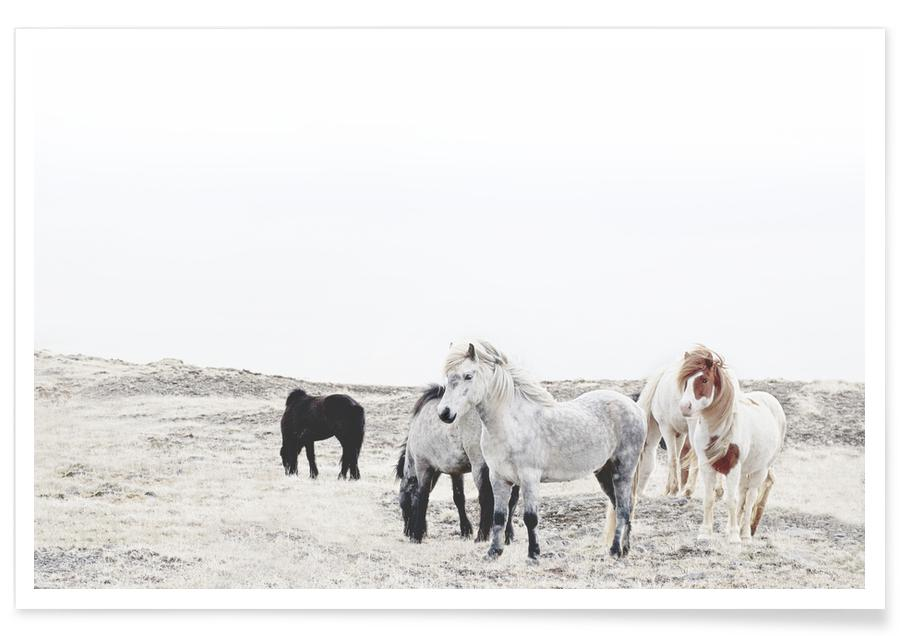 Wild and Free Horses 1 Poster