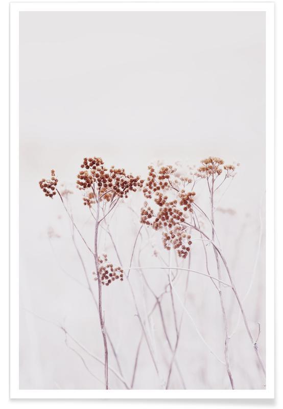 Wild Flowers Iceland 115 affiche