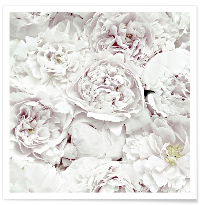 Roses, Flowers Peony White Poster