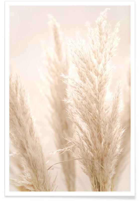 , Pampas Reed 8 Poster