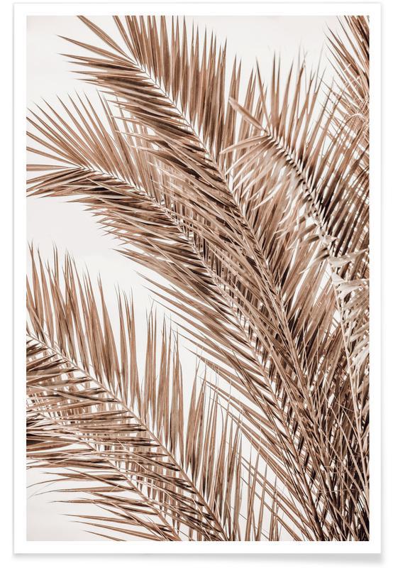 Palmen, Palms Of Madeira 1 -Poster