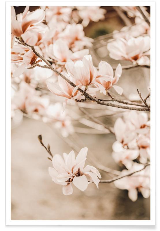 Arbres, Magnolias 1 affiche