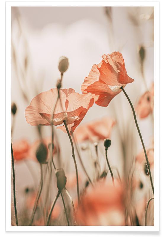 , Sunkissed Flowers 1 Plakat