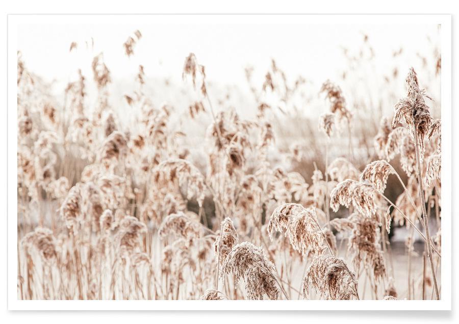 , Wild Reeds poster