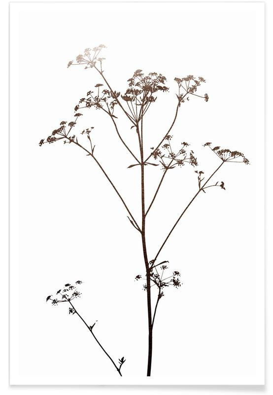 , Dried Flowers Silhouette 1 Poster